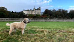 Dog Friendly motorhome scotland