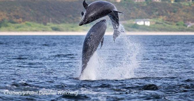north coast 500 dolphin watching
